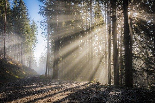 sluneční paprsky v lese.jpg